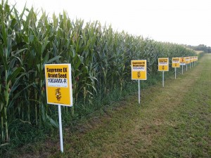 GMO_corn_Yellow_Springs,_Ohio
